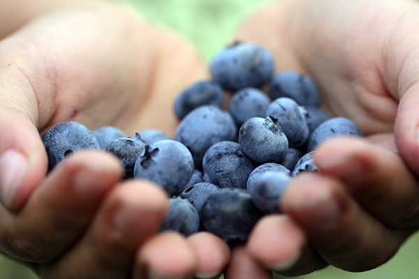 6 Blueberry Delights for a Kidney Diet